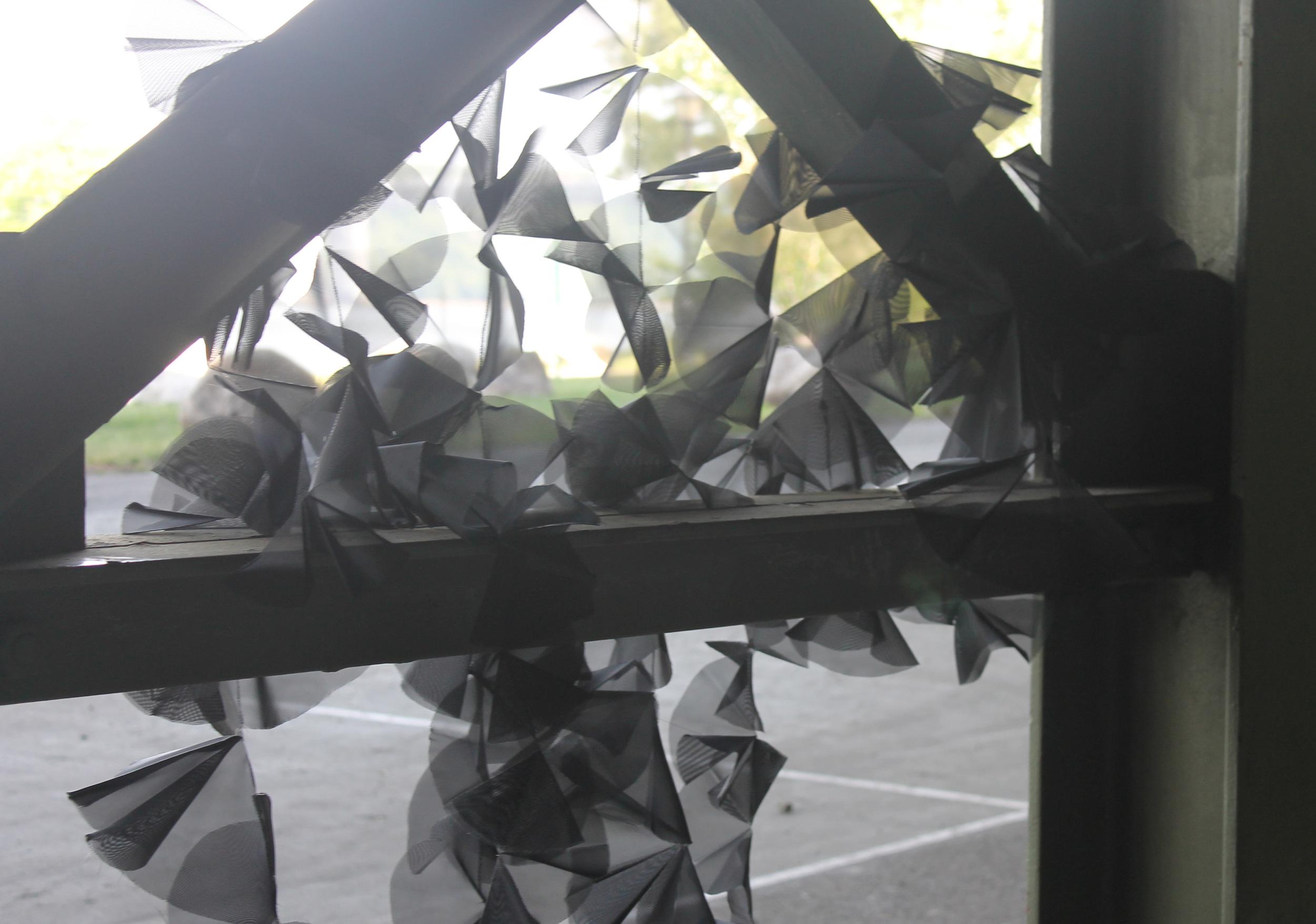 blackflower10.jpg