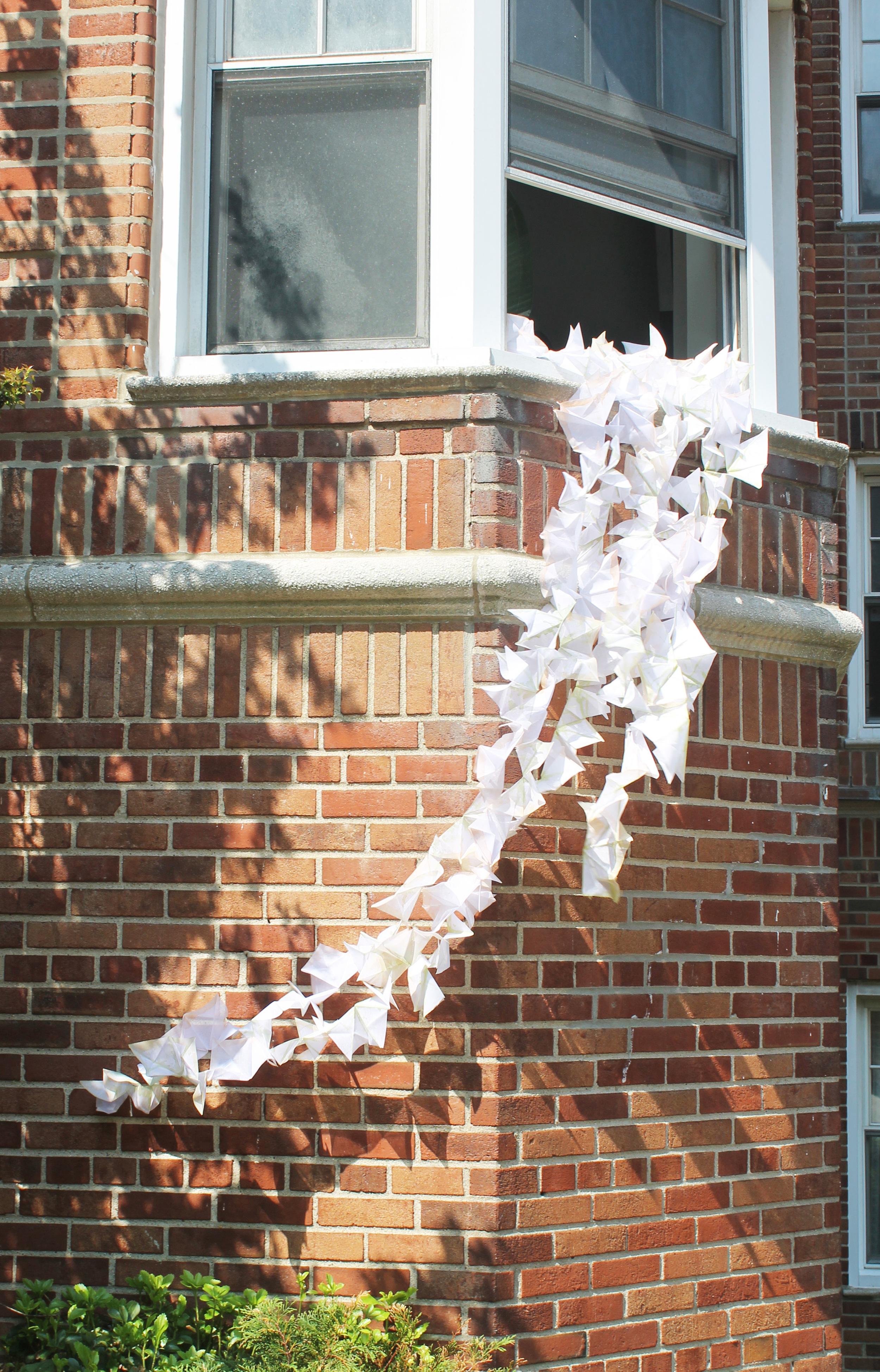 whiteflower1.jpg