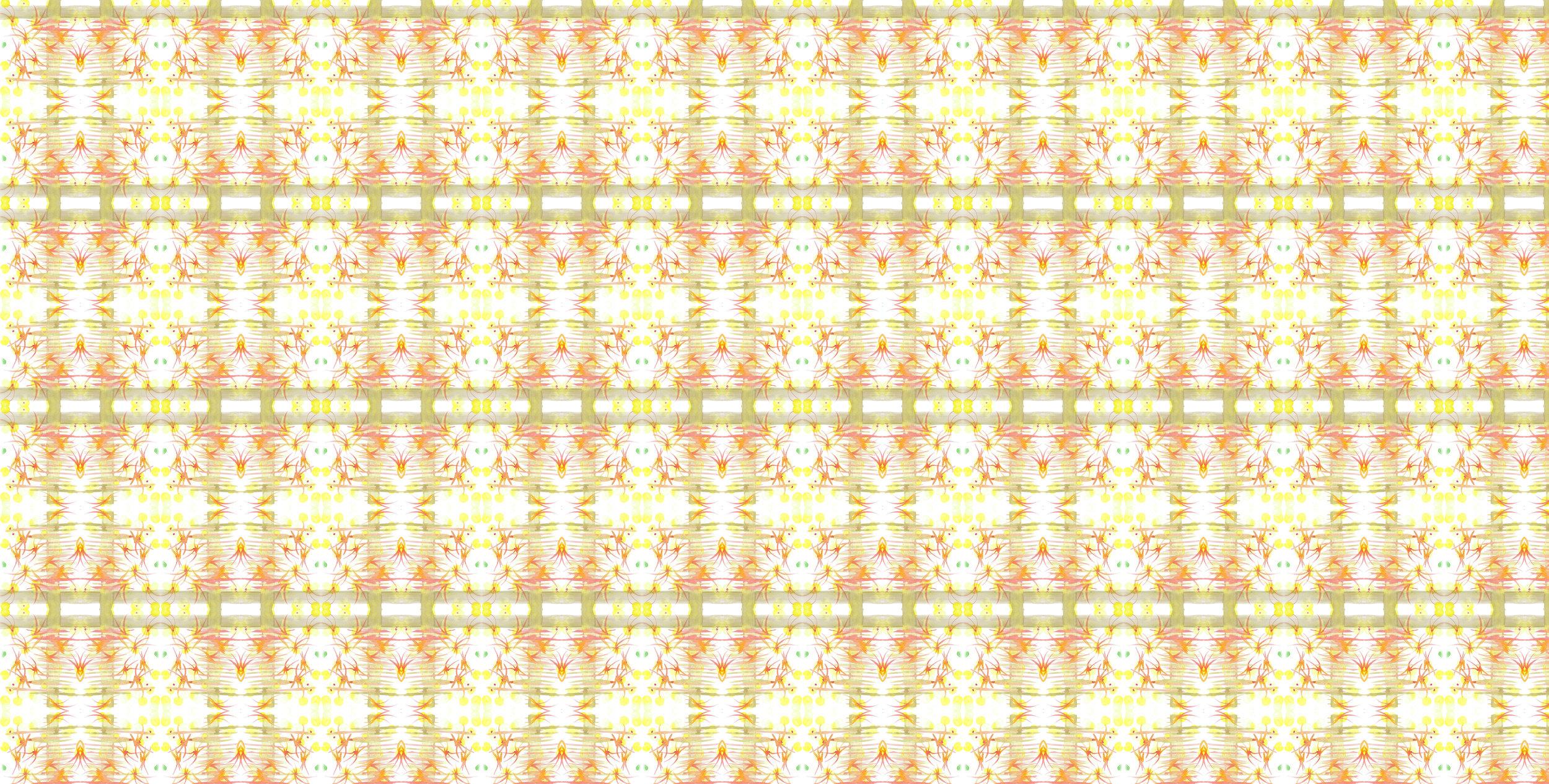 checkered wasps.jpg