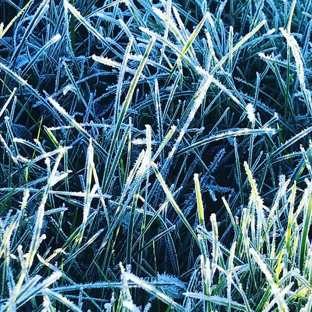 First hard frost this morning. So beautiful. Brilliant crystals everywhere... but painful also, saying goodbye to my garden starting to turn the attention inward. Ordering warm gloves and boots for the family. Winter is coming... ❄️ 🌱