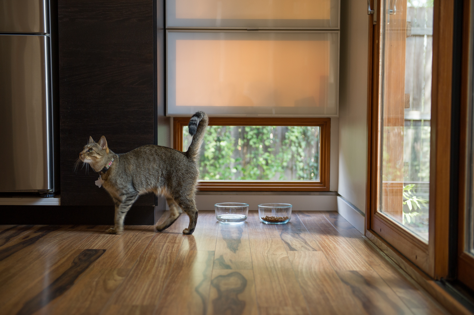 Marta Kitchen Cat 2-7212.jpg