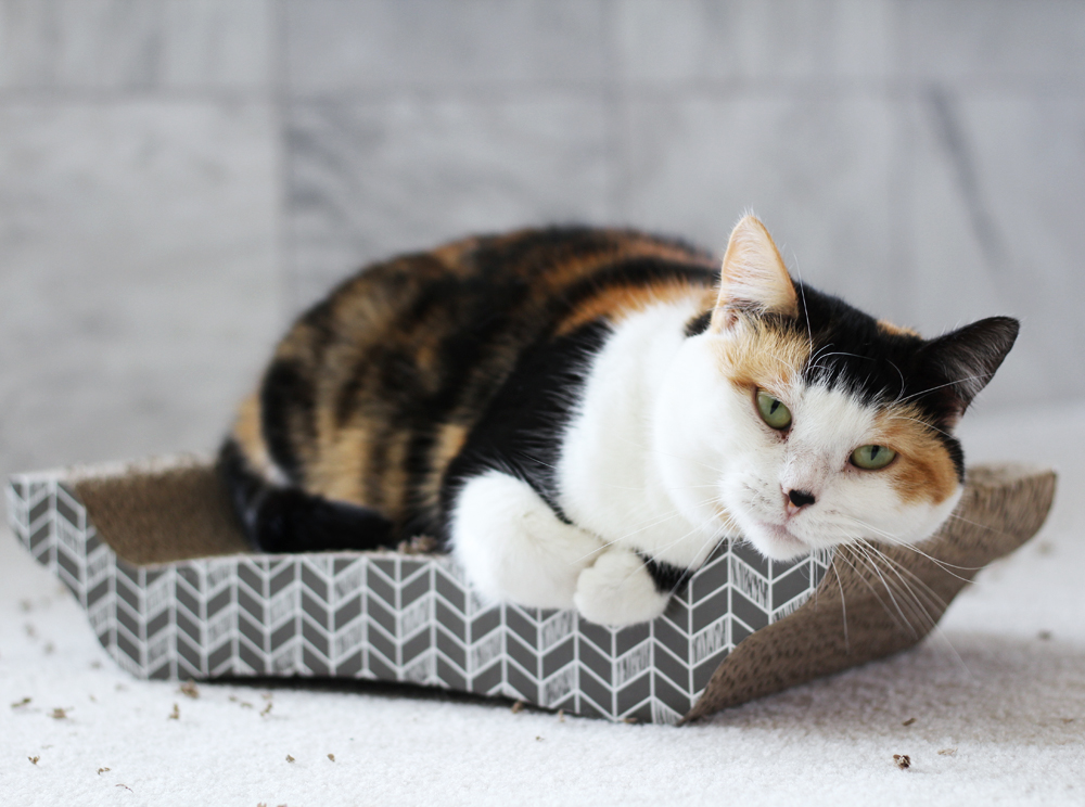 Sybil on a cardboard cat scratcher // Cotton Cashmere Cat Hair