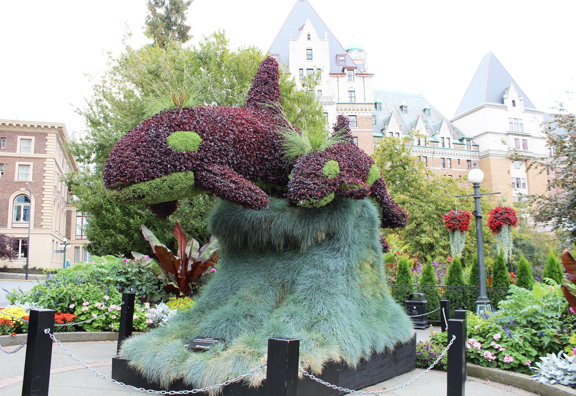 Whale topiaries, Victoria, British Columbia — via Cotton Cashmere Cat Hair
