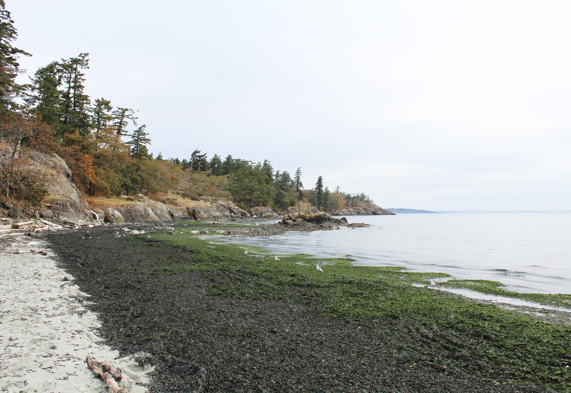Beach in Metchosin, British Columbia — via Cotton Cashmere Cat Hair