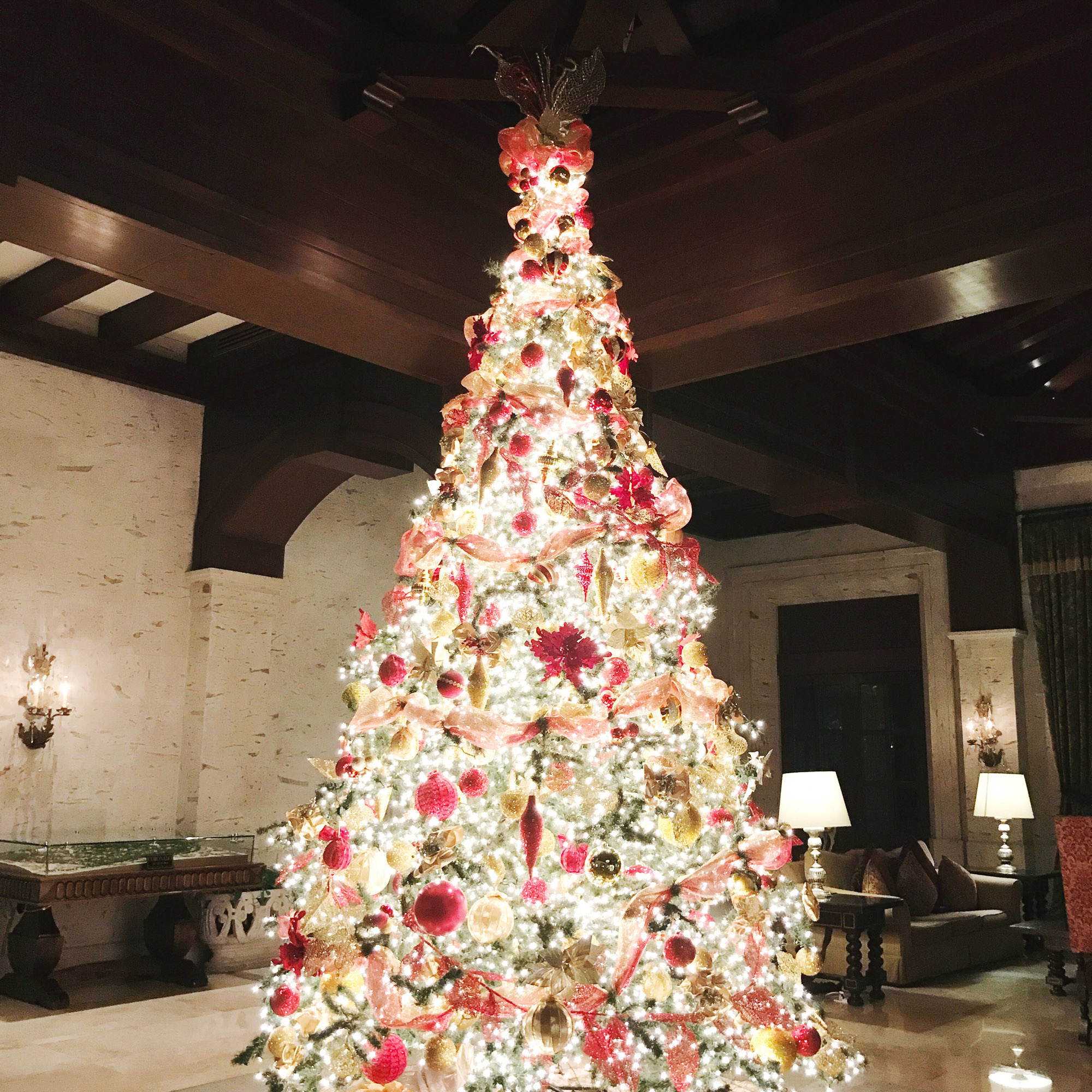 Christmas tree at Pueblo Bonito Resort, Cabo San Lucas, Mexico — Cotton Cashmere Cat Hair