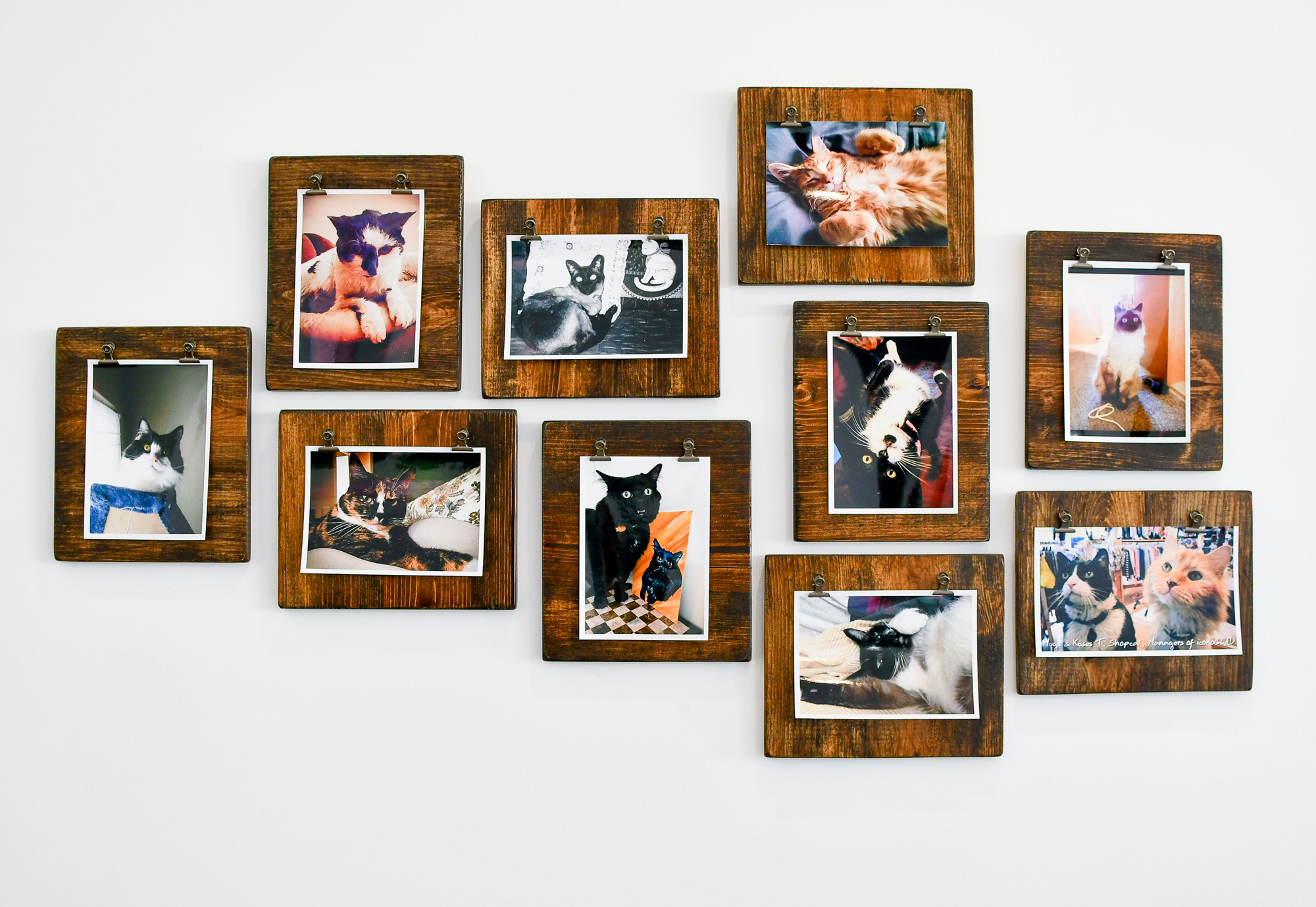Cat wall at Tinker's Cat Cafe, Salt Lake City, Utah — Cotton Cashmere Cat Hair