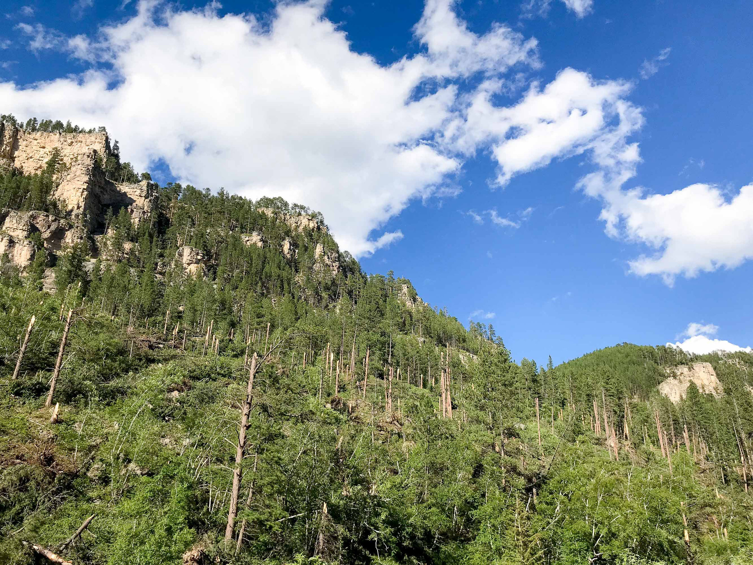 Tornado damage in Spearfish Canyon — via Cotton Cashmere Cat Hair