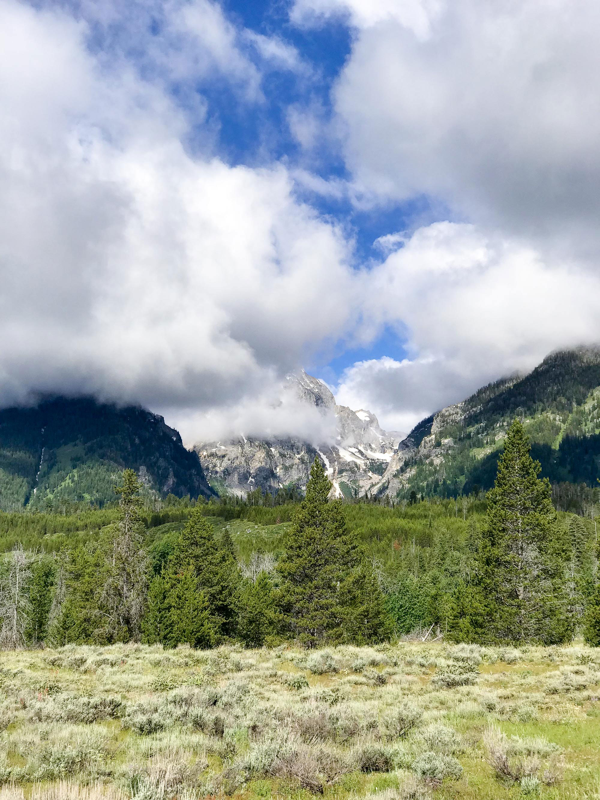2018 travel: Grand Teton and Yellowstone — Cotton Cashmere Cat Hair