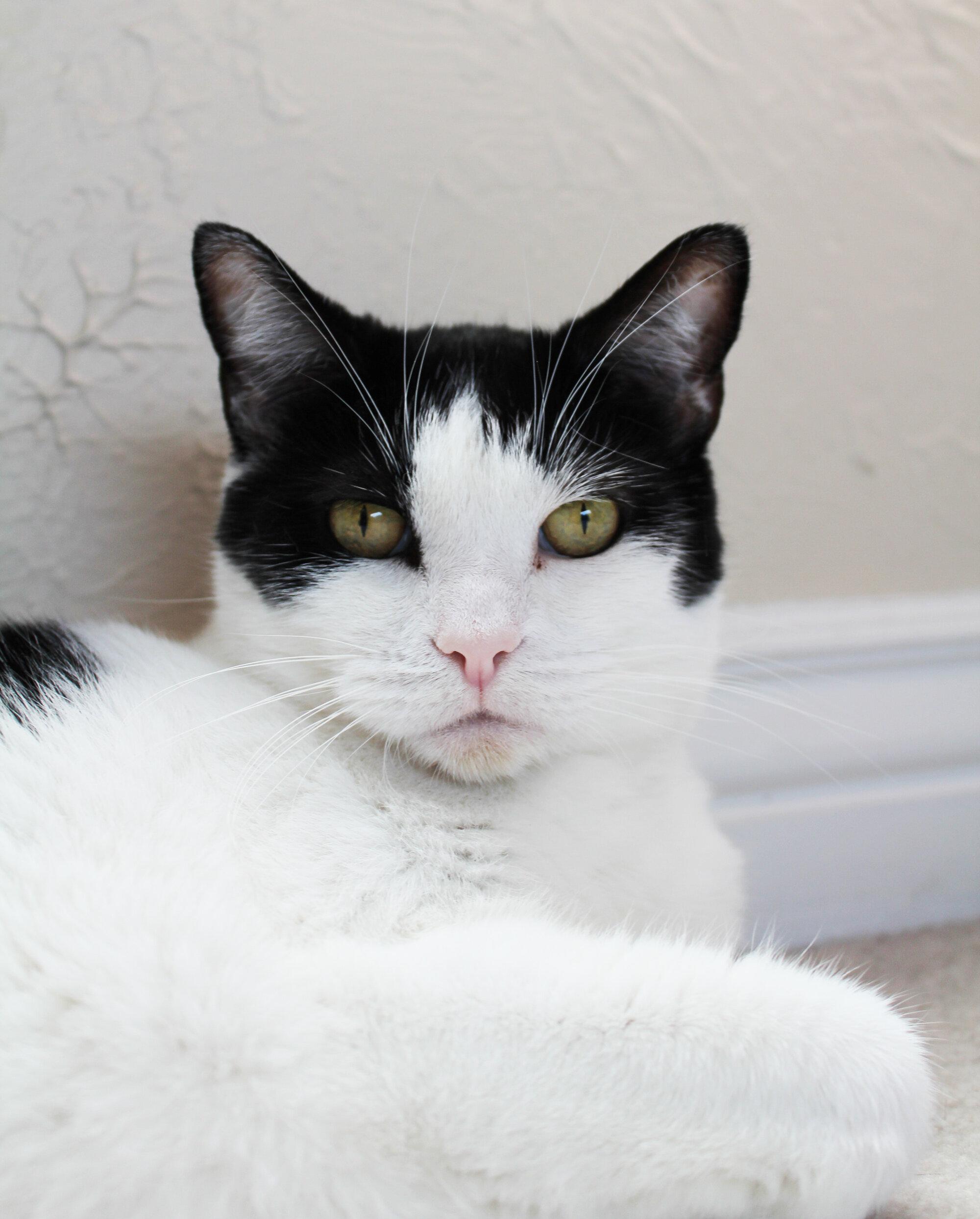 Anti-bucket list: adopted Rosie — Cotton Cashmere Cat Hair
