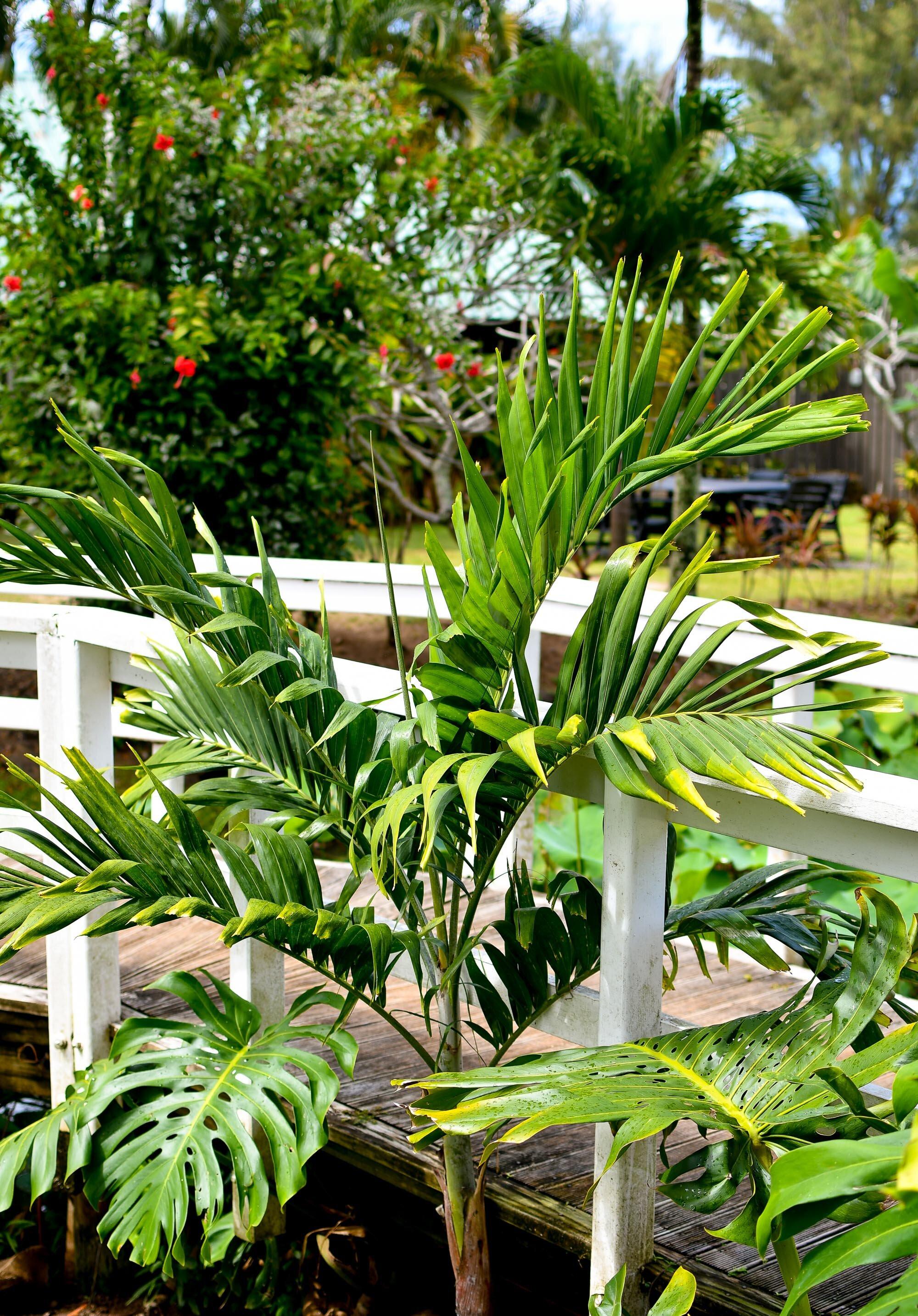 Garden at Muri Beachcomber, Rarotonga, Cook Islands — Cotton Cashmere Cat Hair