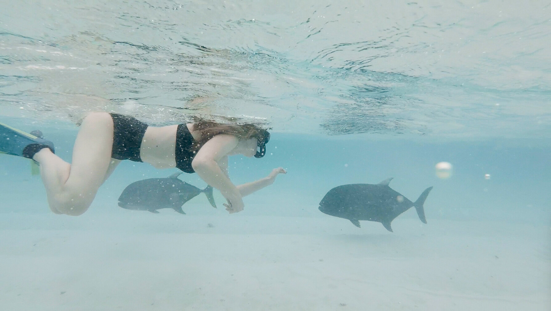 Snorkeling with the giant trevally fish in Aitutaki, Cook Islands — Cotton Cashmere Cat Hair