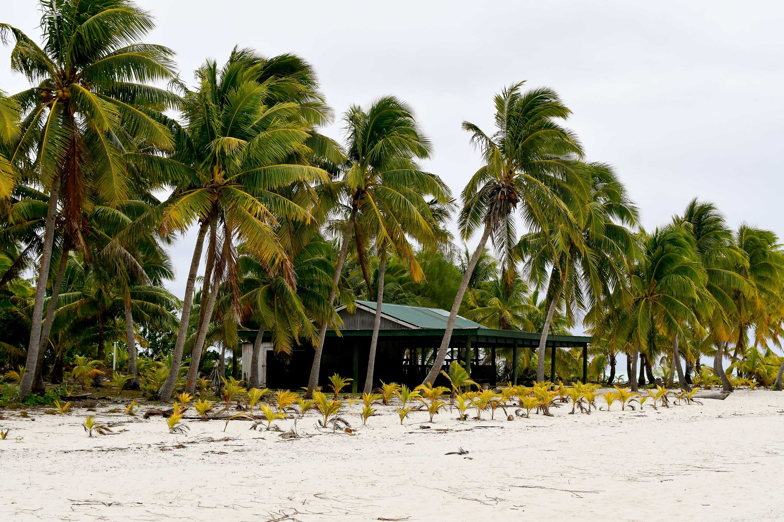 Post office on One Foot Island, Aitutaki, Cook Islands — Cotton Cashmere Cat Hair