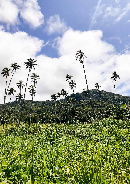 Tropical foliage on Rarotonga, Cook Islands — Cotton Cashmere Cat Hair