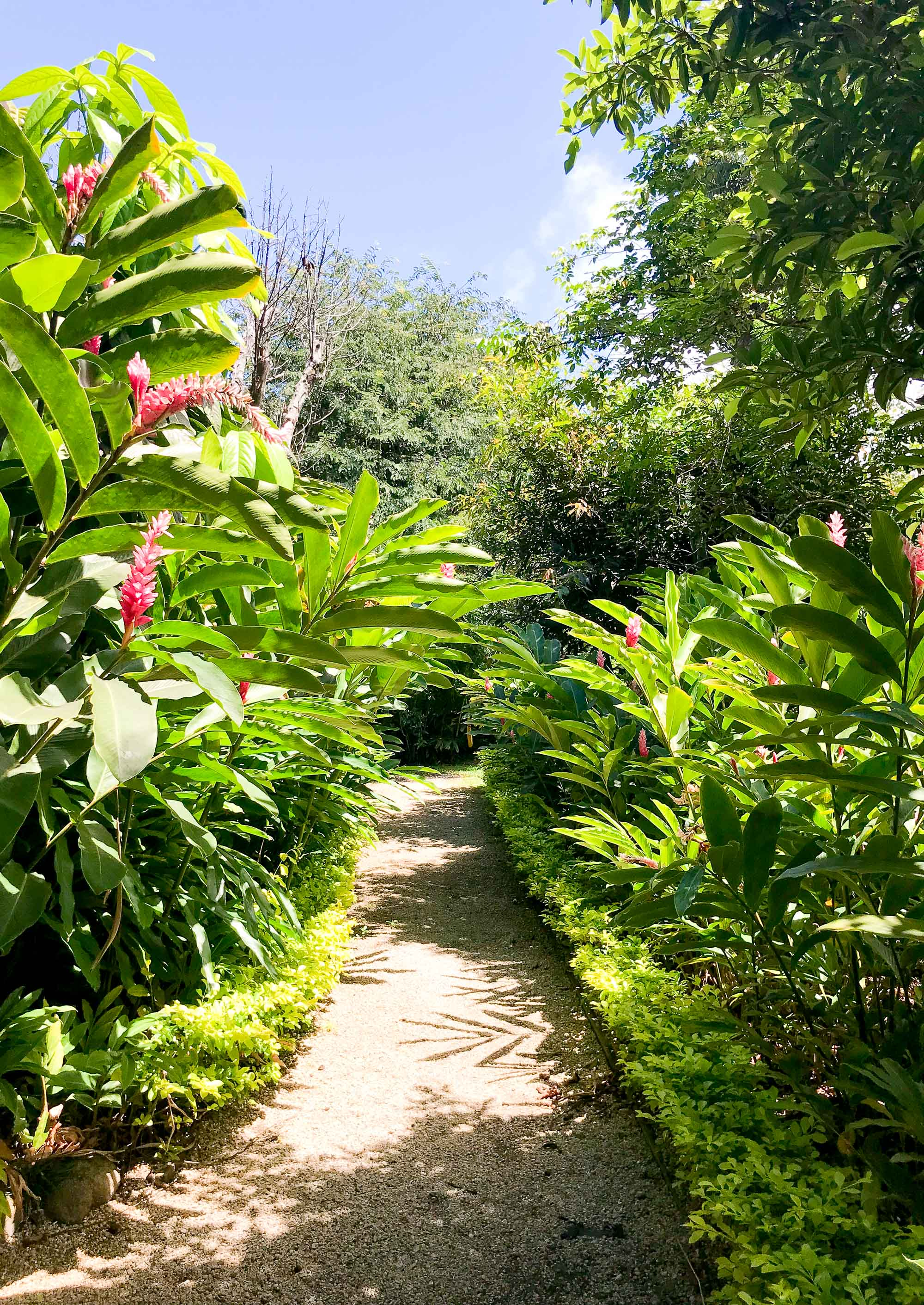 Path of greenery at Maire Nui Gardens, Rarotonga, Cook Islands — Cotton Cashmere Cat Hair
