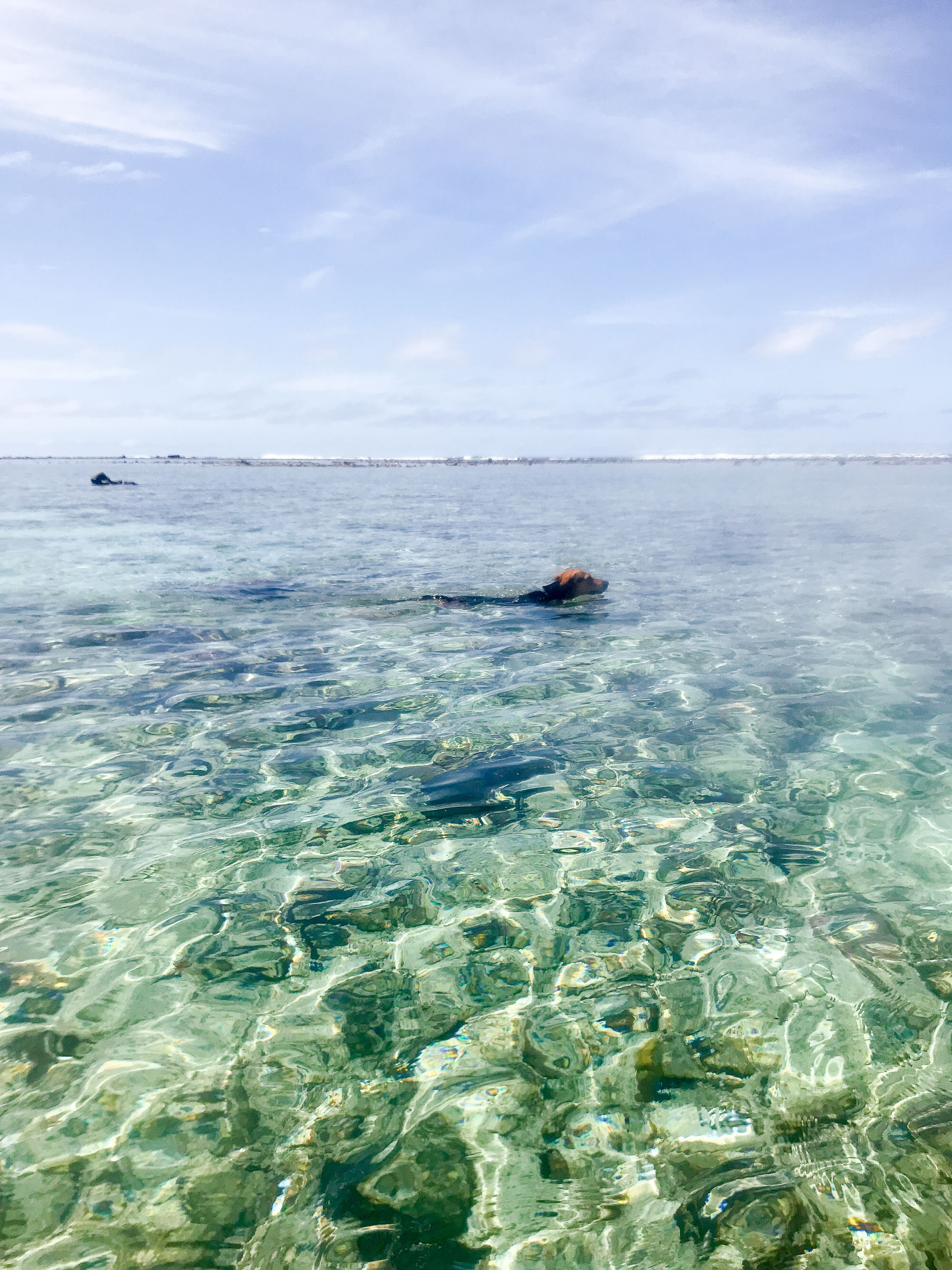 Dog swimming in Muri lagoon, Rarotonga, Cook Islands — Cotton Cashmere Cat Hair