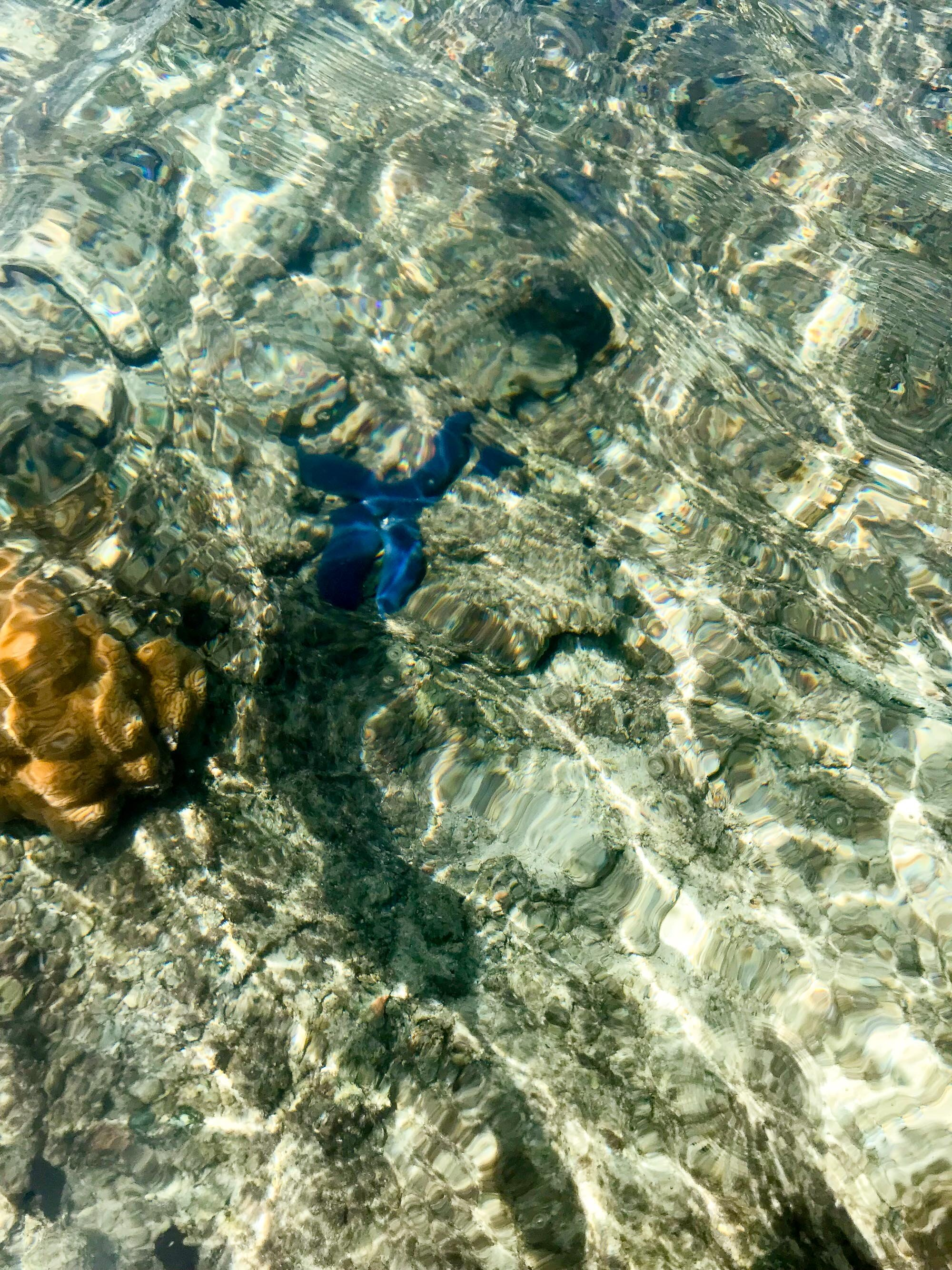 Blue starfish in Muri Lagoon, Rarotonga, Cook Islands — Cotton Cashmere Cat Hair