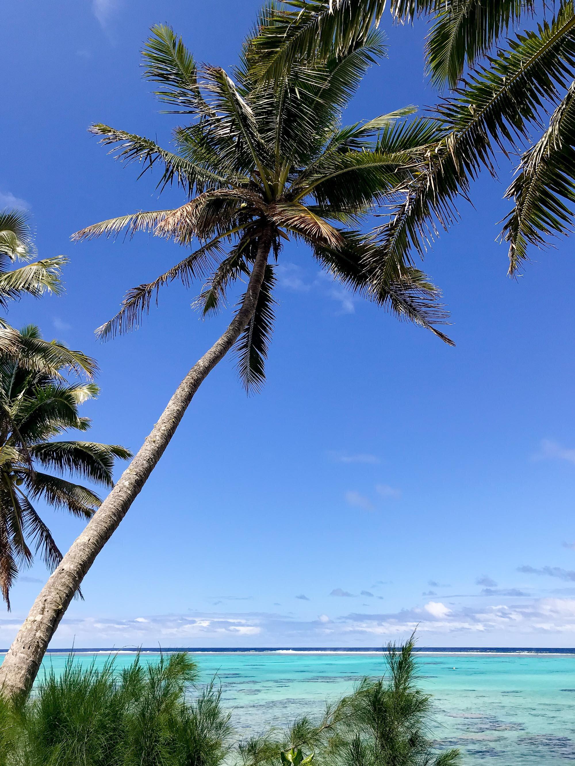 Titikaveka, Rarotonga, Cook Islands — Cotton Cashmere Cat Hair