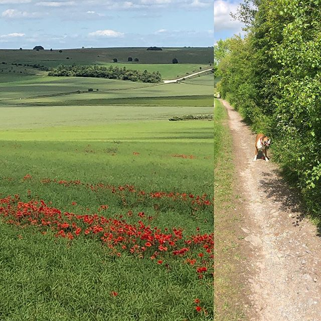 Dog walk views #wiltshire #countryside #poppys #salisburyplain #blessed
