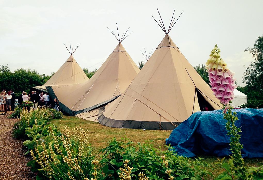 Gorgeous fox gloves surrounding the Teepees.
