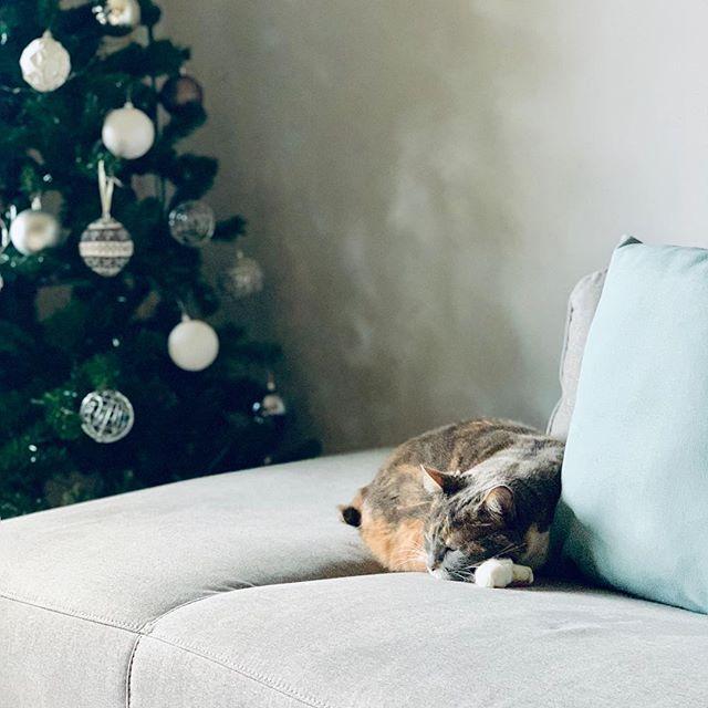 Happy holidays everyone!! #happyhanukkah #merrychristmas #happyholidays #happyholidaze #design #graphicdesign #manxcat #cat #catofinstagram #christmastree