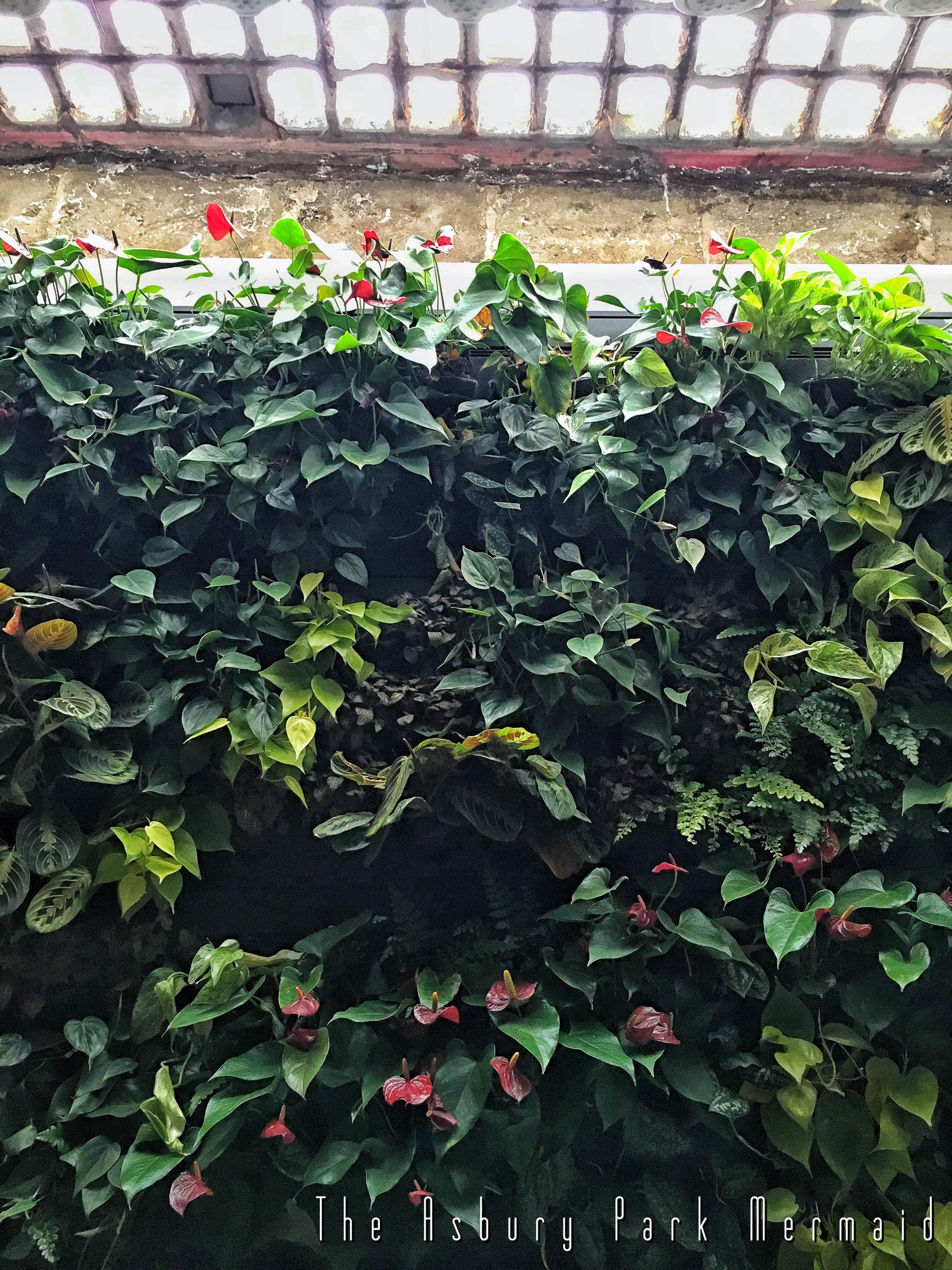 The Basement's living wall