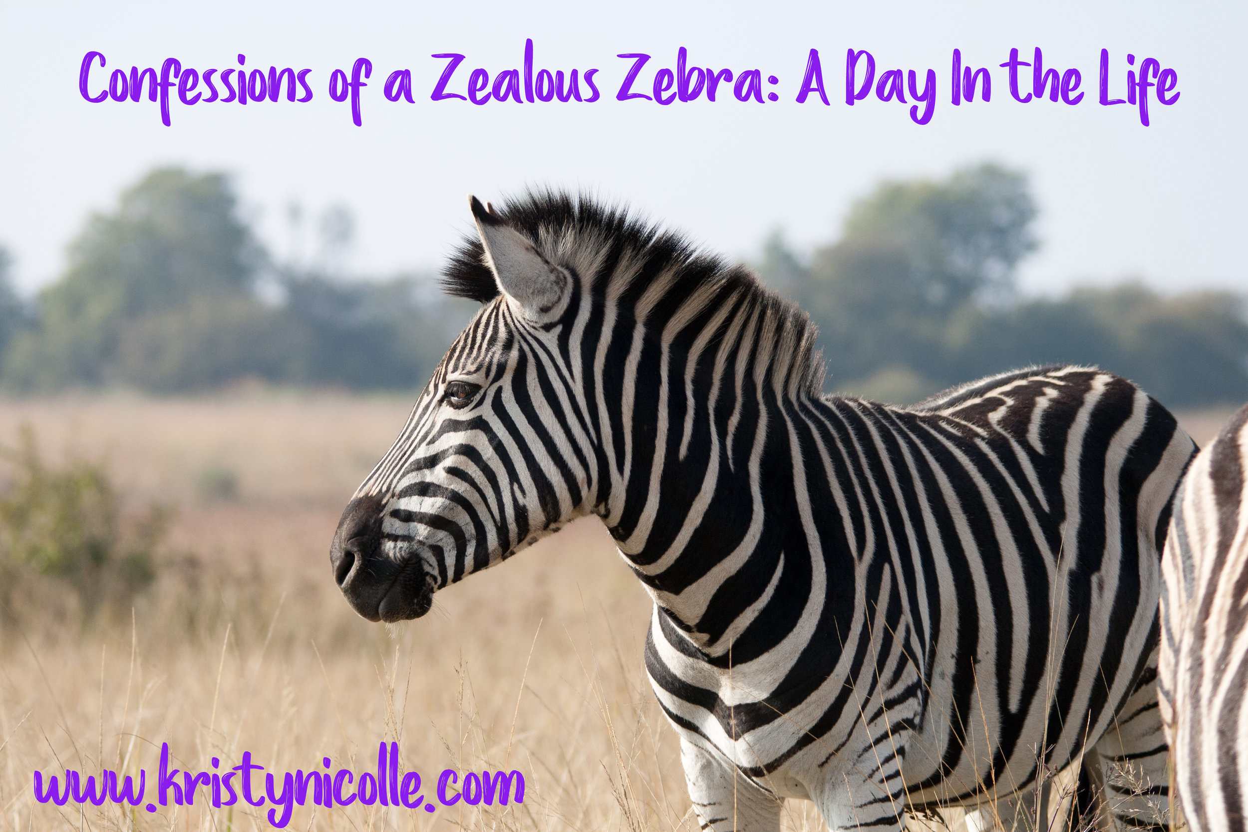 A day in the life- Kristy Nicolle- Zealous Zebra
