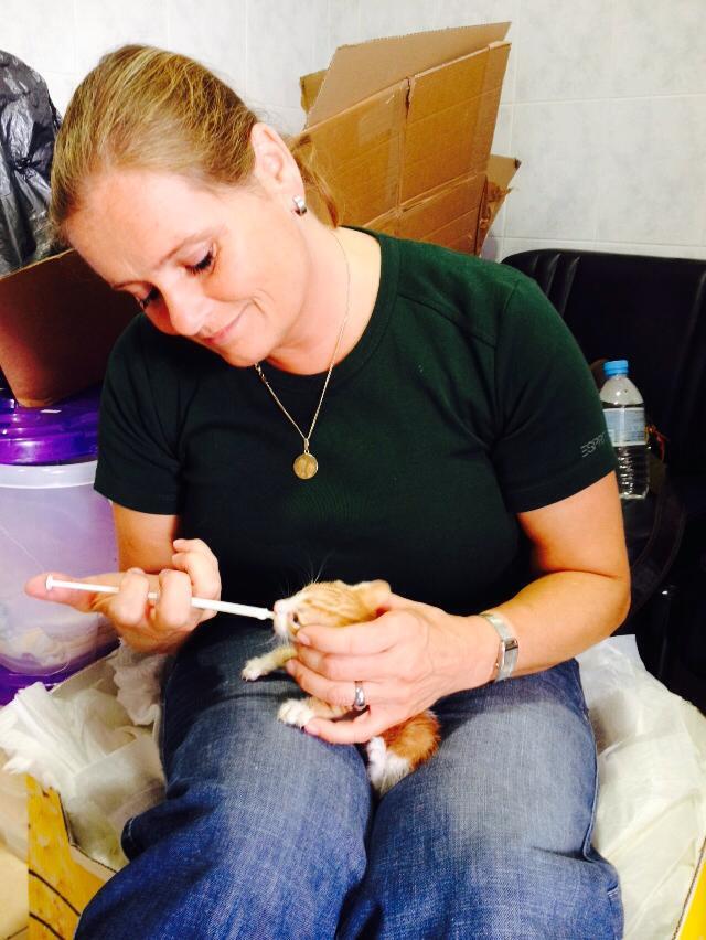 Kittenopvang noord-Holland opvang voor zieke kittens