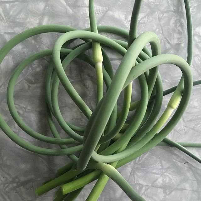 #nofilter needed for these gorgeous garlic scapes! What is your favorite way to prepare scapes? We're dreaming of pesto 😍 #slowfood #growyourownfood #happyweekend #garlicscapes #goodcleanfair