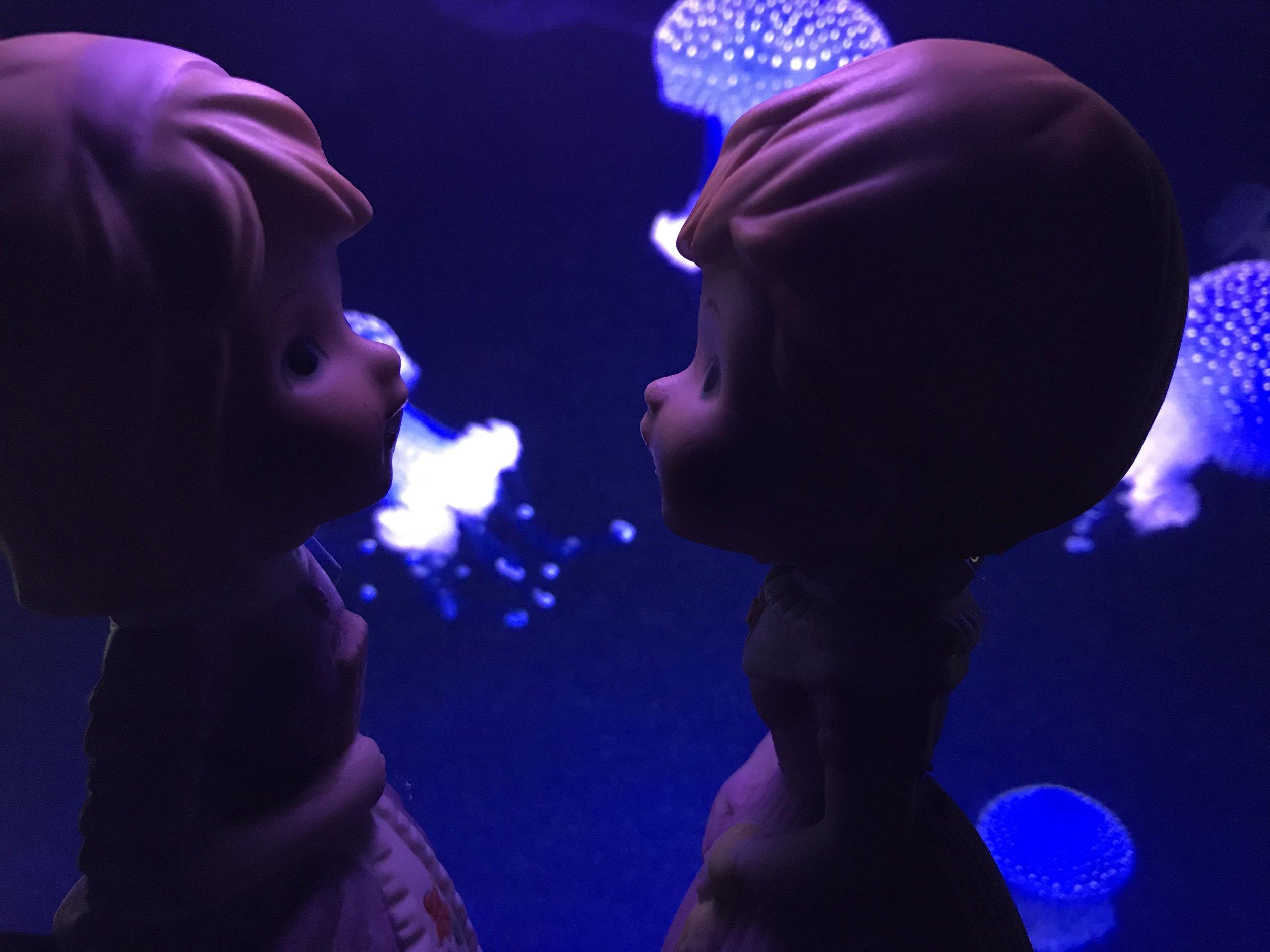 Rollins_cephalophoresjellyfish.jpeg