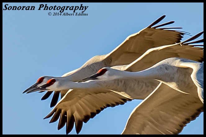 Three Cranes_ASE8600.jpg