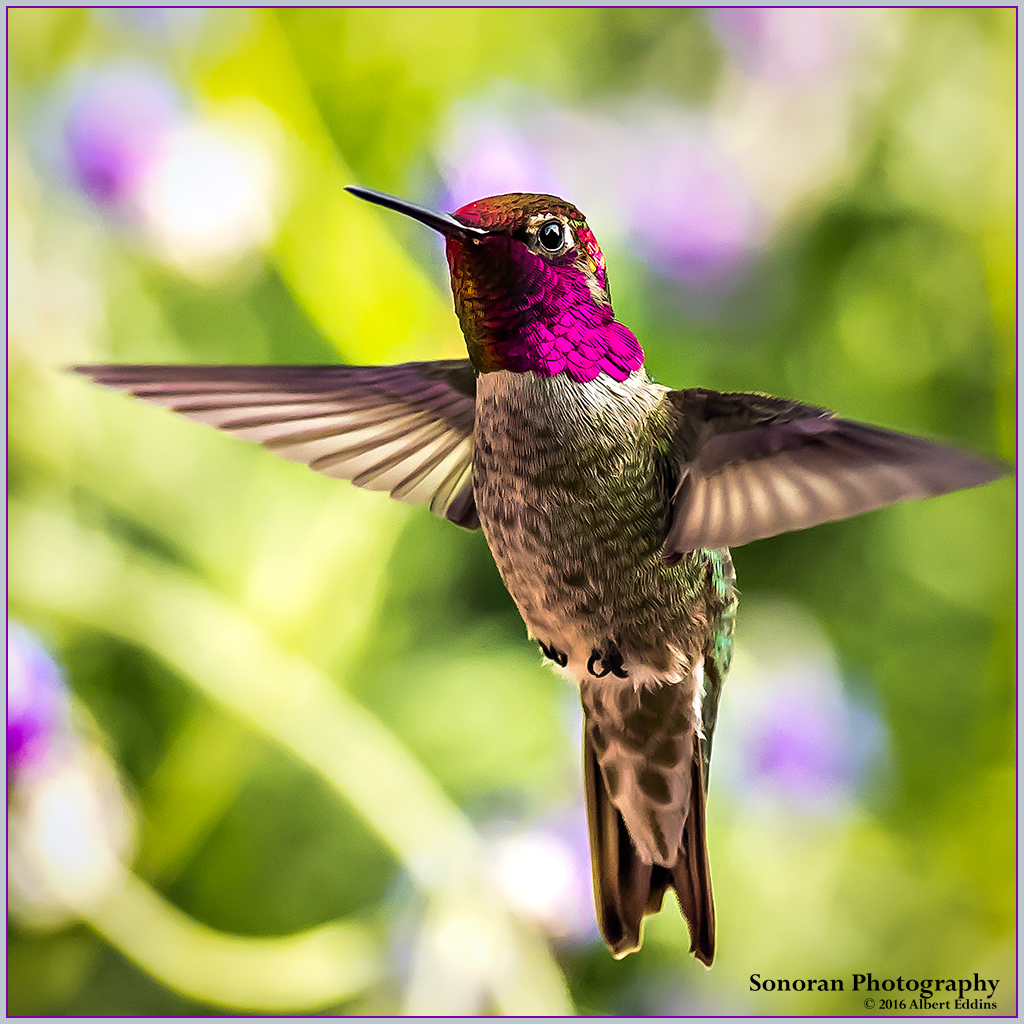 Hummingbird in living color