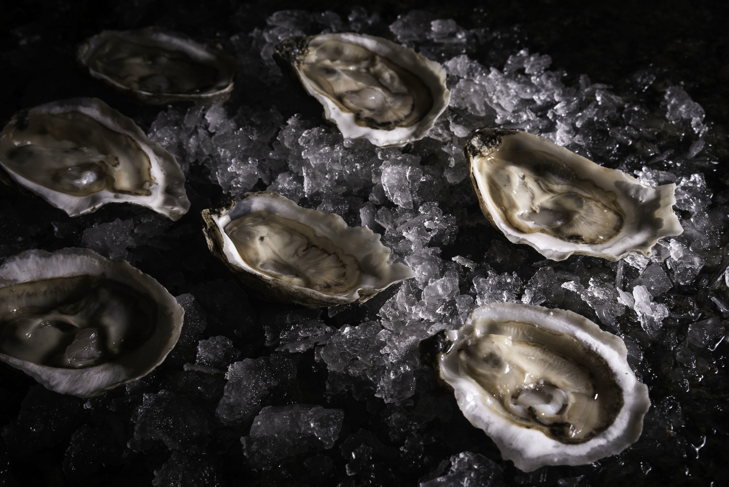 oyster-1.jpg