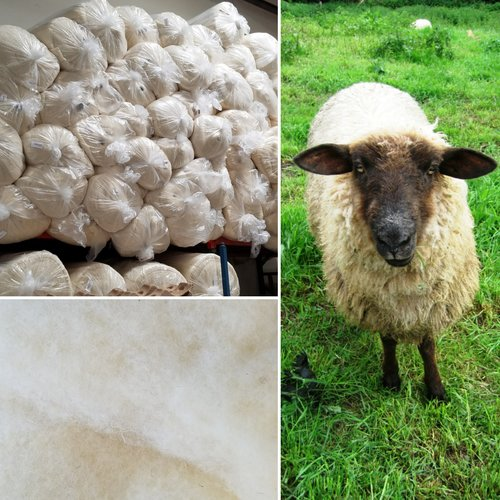 SHEEP COLLAGE.jpg