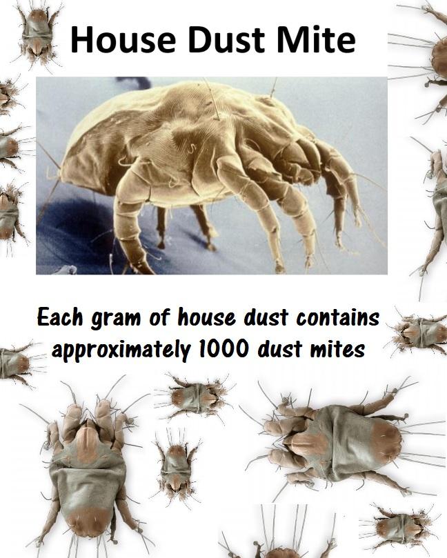 dust+mite.jpg