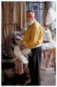 """Bukhara's Rabbi since 1974, Aaron Sianov dispassionately slaughters a chicken by cutting its throat in accordance with Jewish ritual -- without breaking any bones. The rabbi's passion only reveals itself when he sings. Rabbi Sianov is Bukhara's finest remaining performer of the town's distinctive, traditional Tajik-Jewish melodies. """"The best time to listen is on Shabbat, or maybe with a bottle of vodka,"""" he says, finally admitting a smile."""