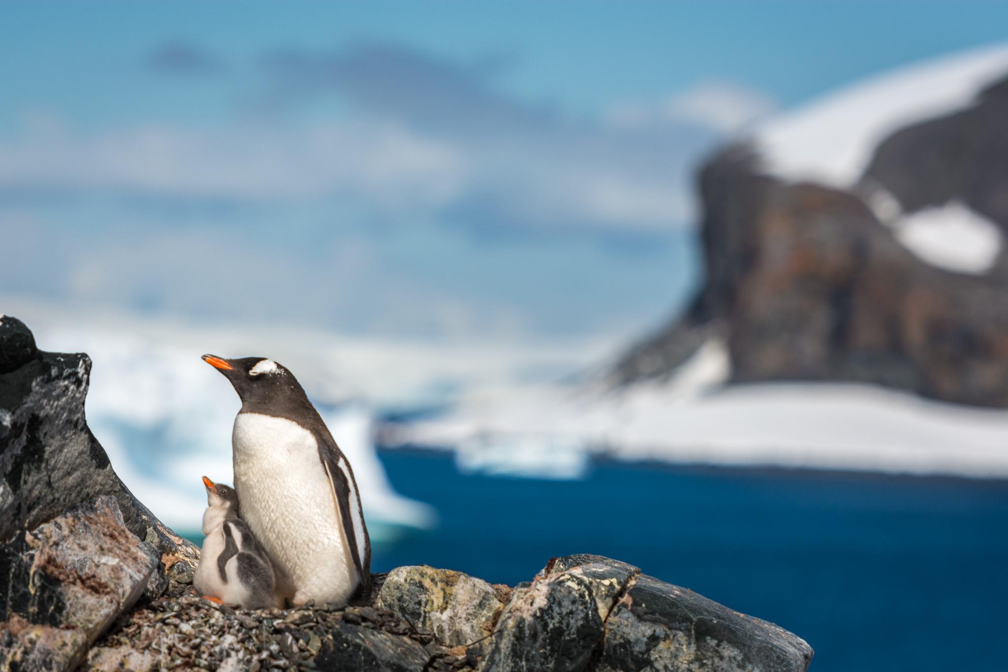 penguinandbaby.jpg