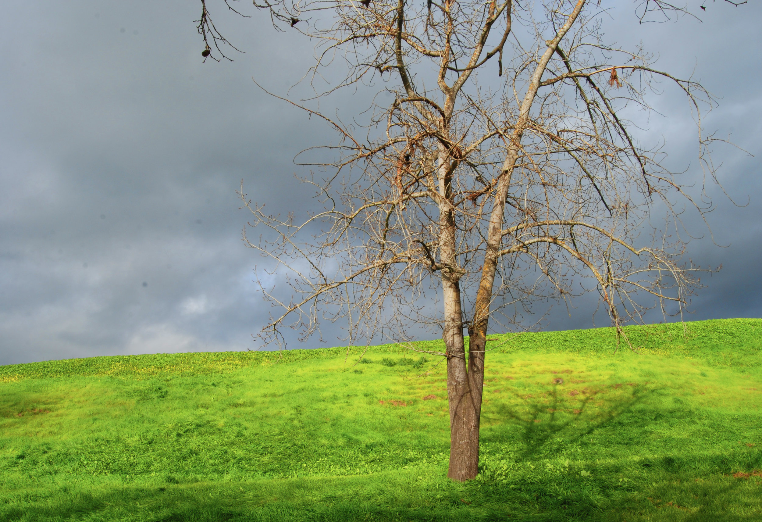 TreeAngrySky.jpg
