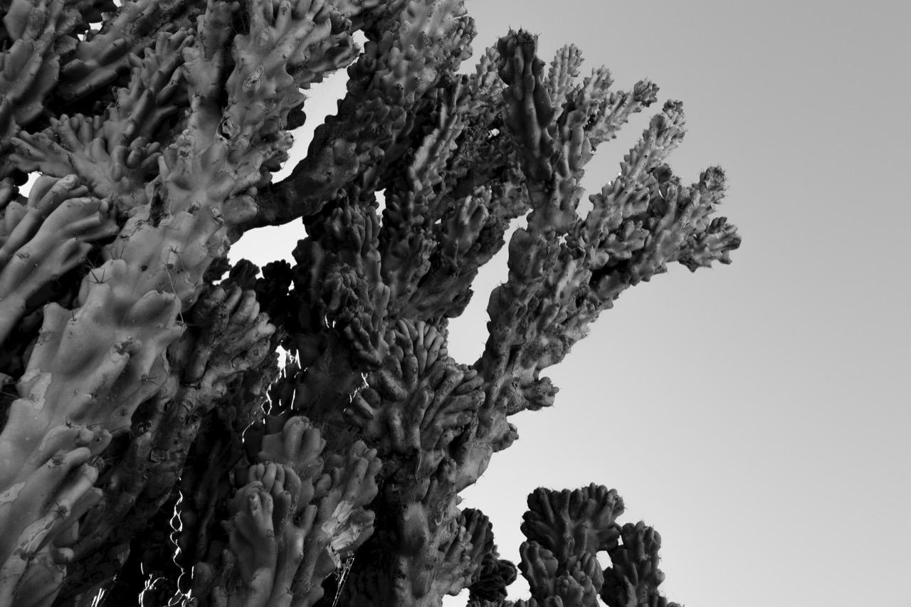 Cacti.jpeg