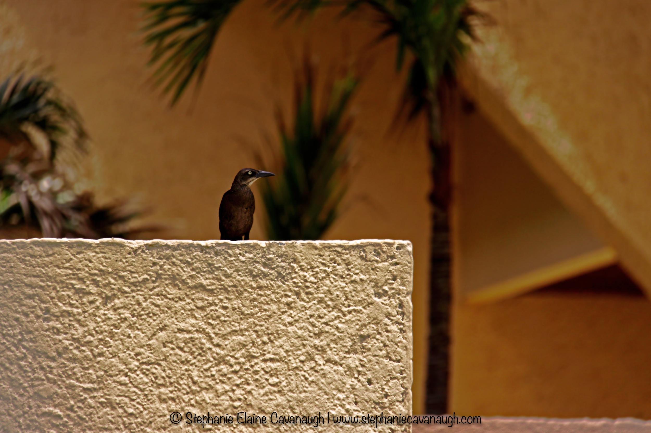 Tropical Bird, © Stephanie Elaine Cavanaugh