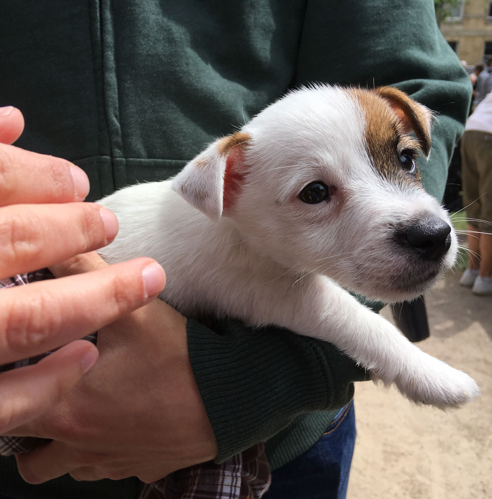 little-dog-3.jpg