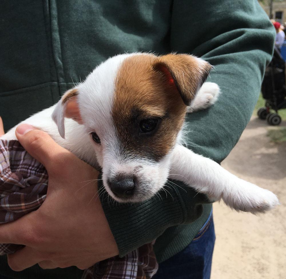 little-dog-4.jpg
