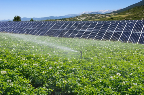 Solar Water Pumping for Irrigation