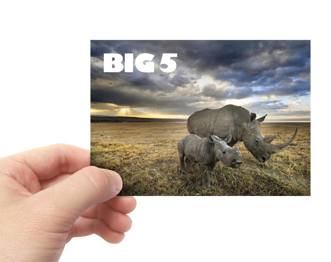RhinoPostcard1.jpg
