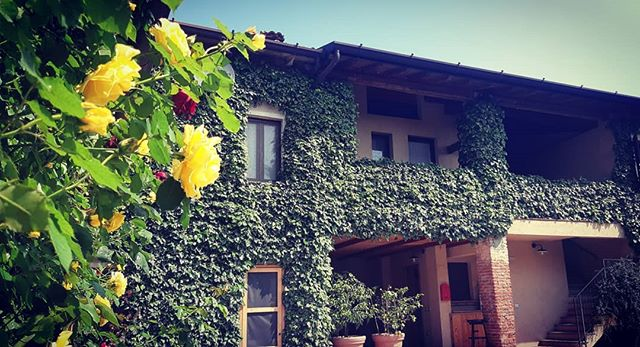 🇮🇹 Roseto fiorito nel nostro agriturismo Borgo San Donino . #selvacapuzza #sandonino #borgosandonino #desenzano #primavera #roseto #roses #farmholidays #holiday #vacanza #relax #agriturismo