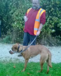 walking dog, seperation anxiety, dog barking