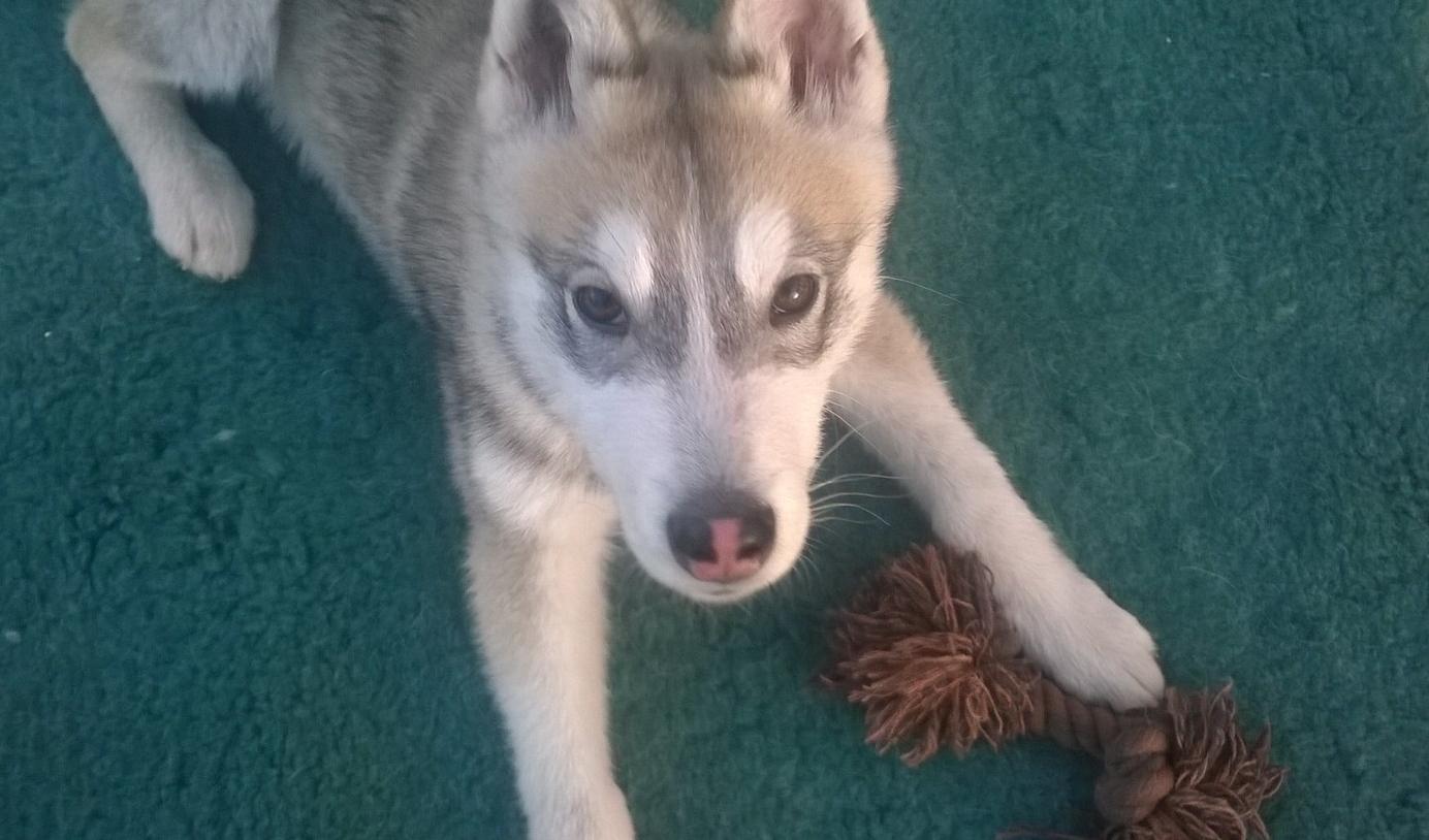 Dog Behaviour and dog psychology