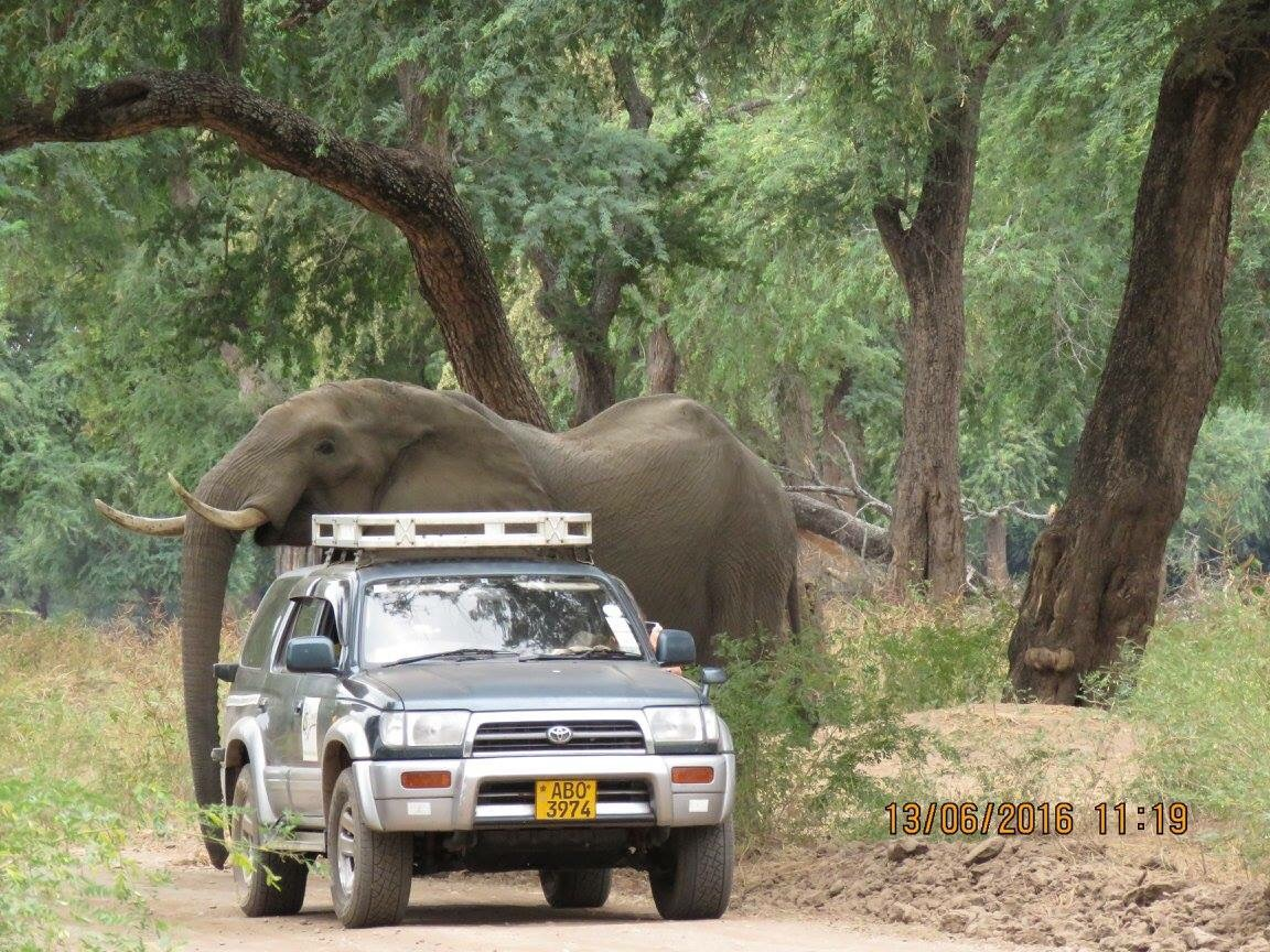 The AWARE Trust on elephant assignment.