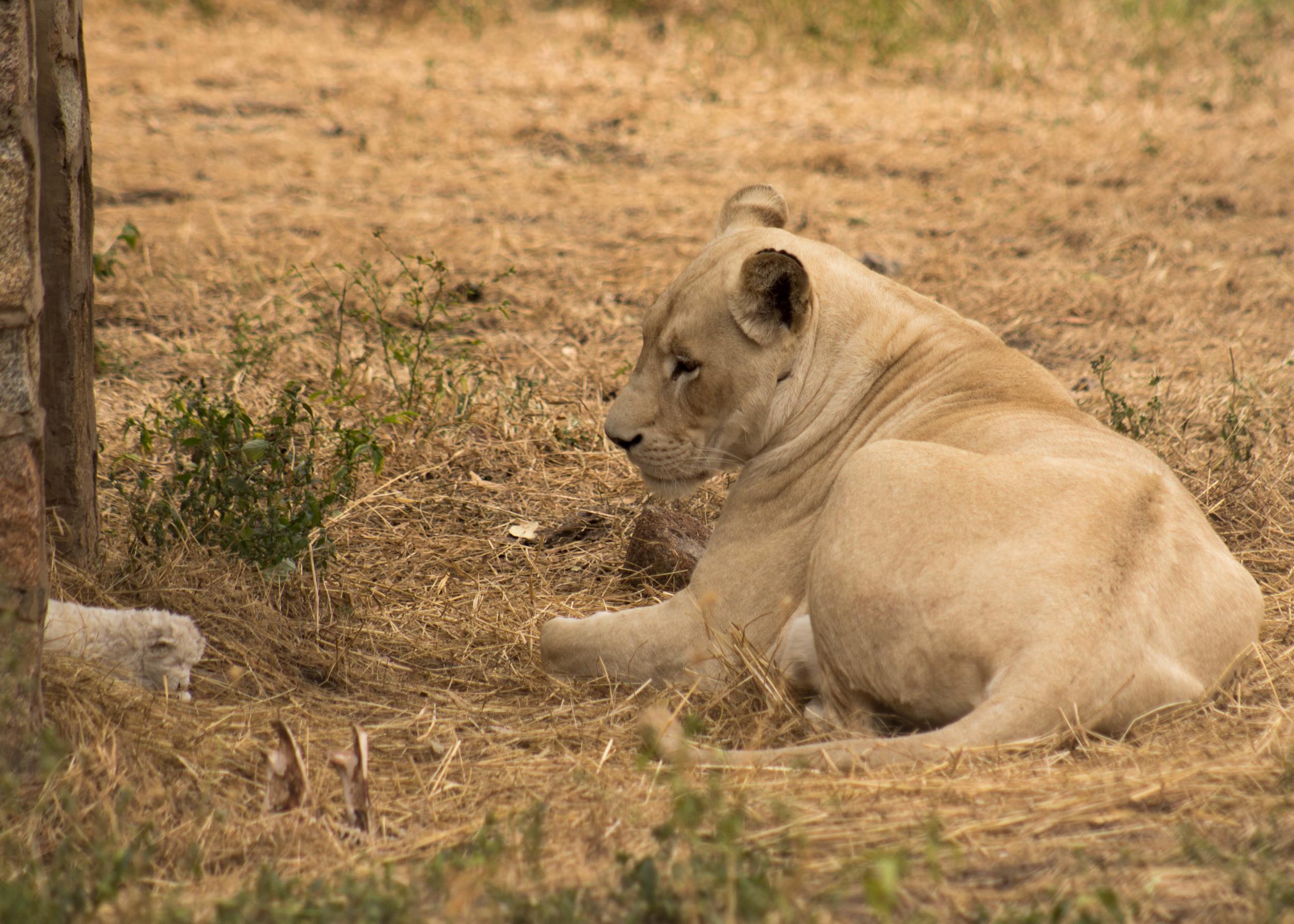 Lola and cub