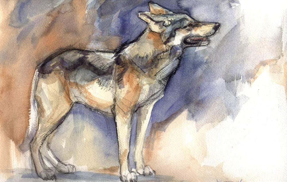 """Mexican Wolf"" by  Joe Weatherly  (watercolor)"
