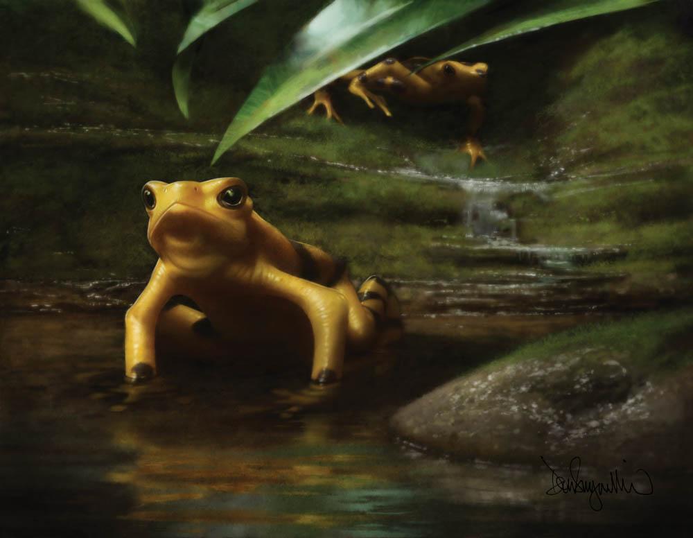 """Panamanian Golden Frog"" by  Don Seegmiller  (digital)"